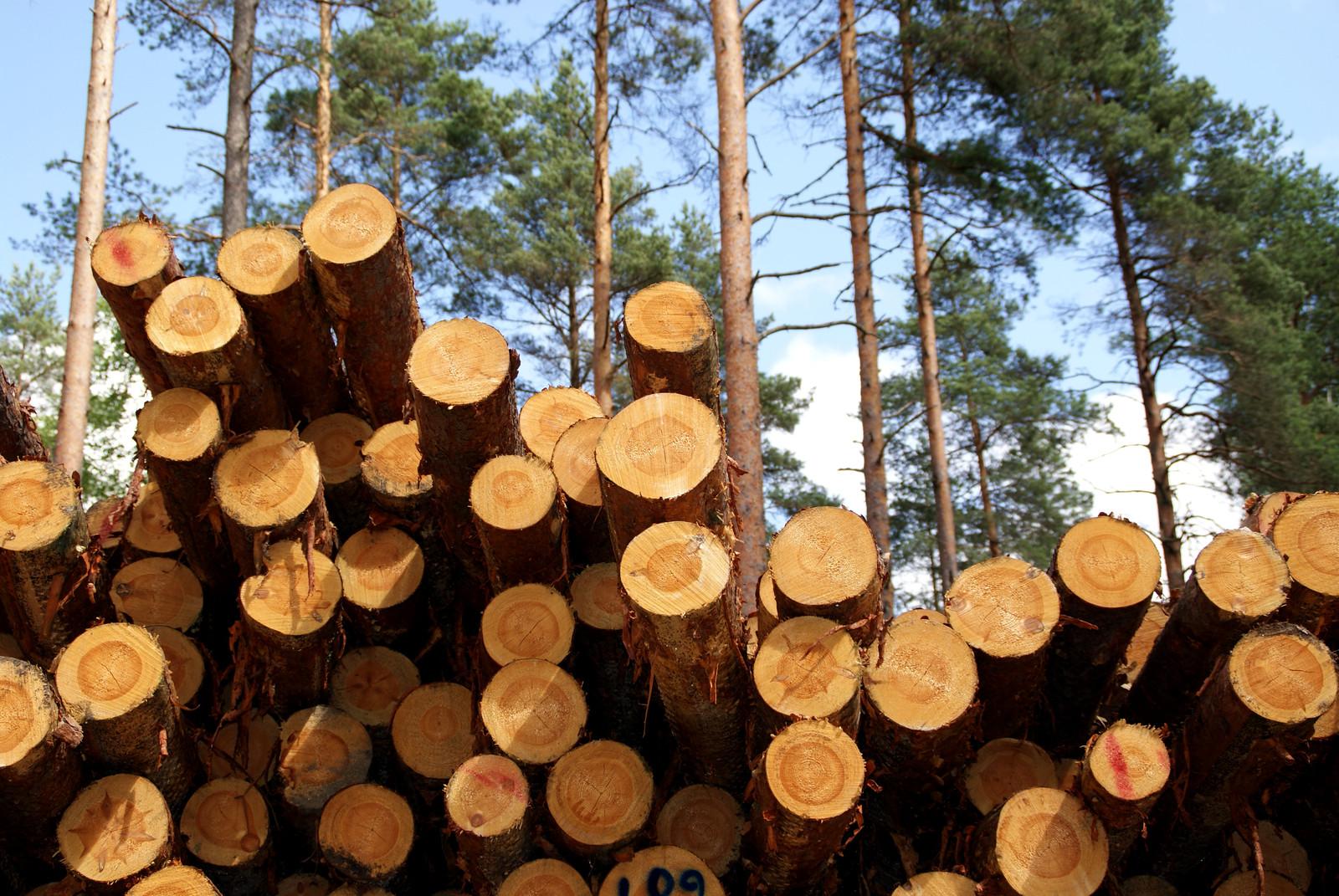 Hay madera para todos