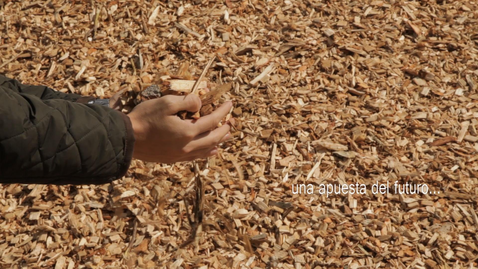Soria cuenta con 146 calderas de biomasa y más de 120 MW de potencia instalada