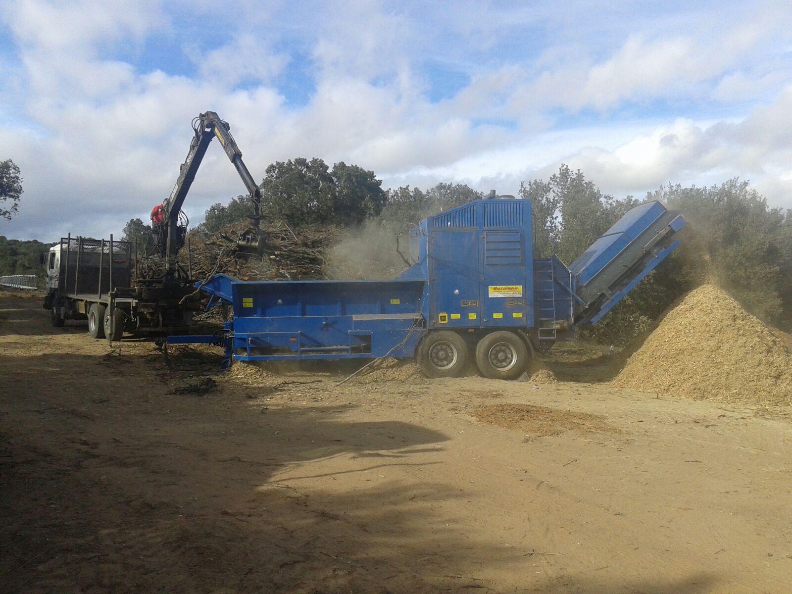 Amatex extrae 400 toneladas de astilla de encina en el monte de Las Ánimas