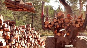 maquinaria amontonando pinos