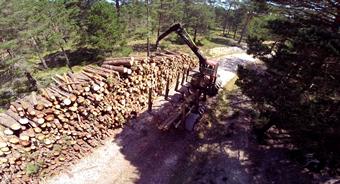 Recogida de troncos en el monte